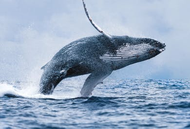 Whale's Resurfacing Shows Danger Persists in the Options Market; How Investors Are Trading November's Election