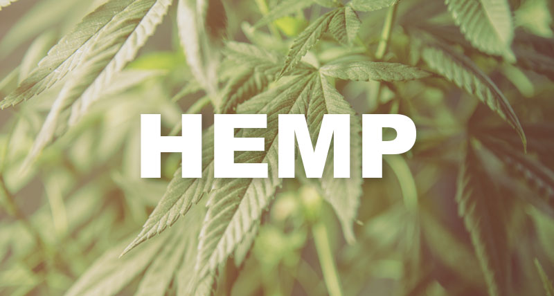 USDA: Hemp Pilot a Success