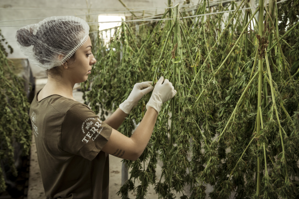 Latest Cannabis License Lawsuit Pits Craft Growers v. the State of Illinois