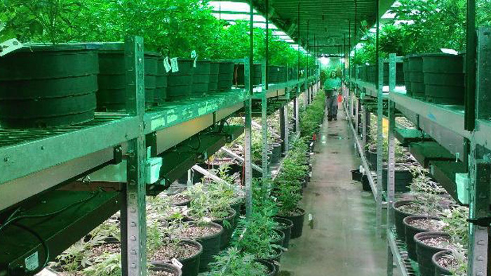 Update: Illinois Offers Object Lesson on Pros vs. Cons of Cannabis Business