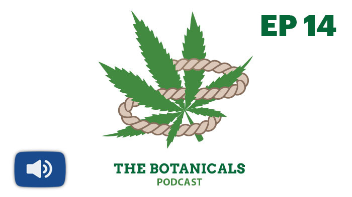 Photo of cannabis plant for botanicals podcast