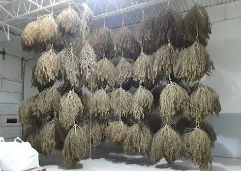 Hemp Biomass Prices Dip as 2021 Harvest Adds Supply, But Emerging Demand Seen